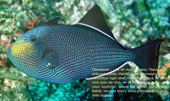 Choubouli, melichthys niger.