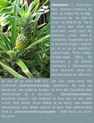 Zannanna, ponm gwo lapo, ananas comosus, ka pòte an chapo fèy ka pitje.