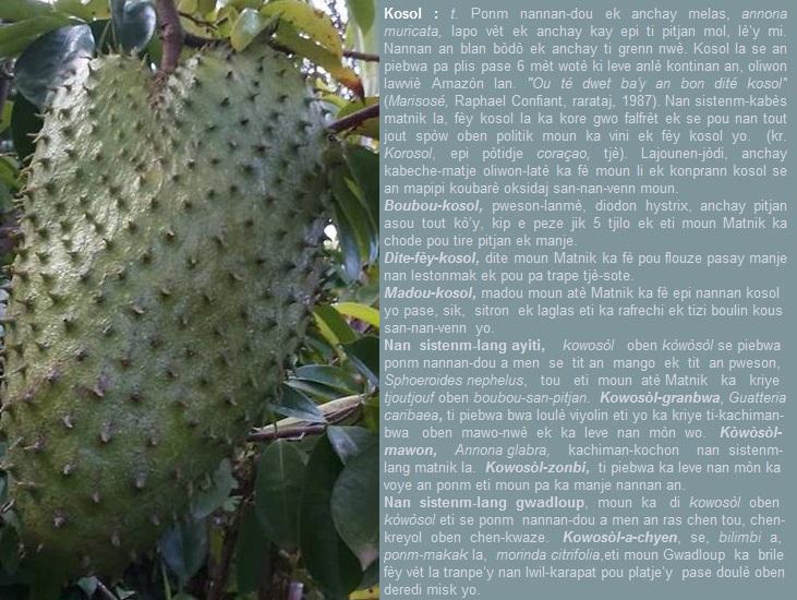 Kosol  Annona muricata  korosol  kòwòsòl (Ayiti ek Gwadloup  tou)