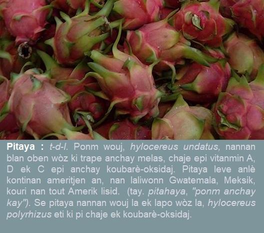 Pitaya  hylocereus undatus  oben pitaya-nannan-wouj  hylocereus polyrhizus