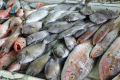 Caribbean-fish-