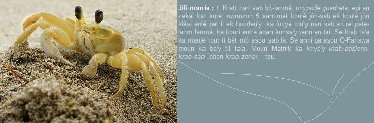 Jili-nomis, krab nan sab bò-lanmè, ocypode quadrata,
