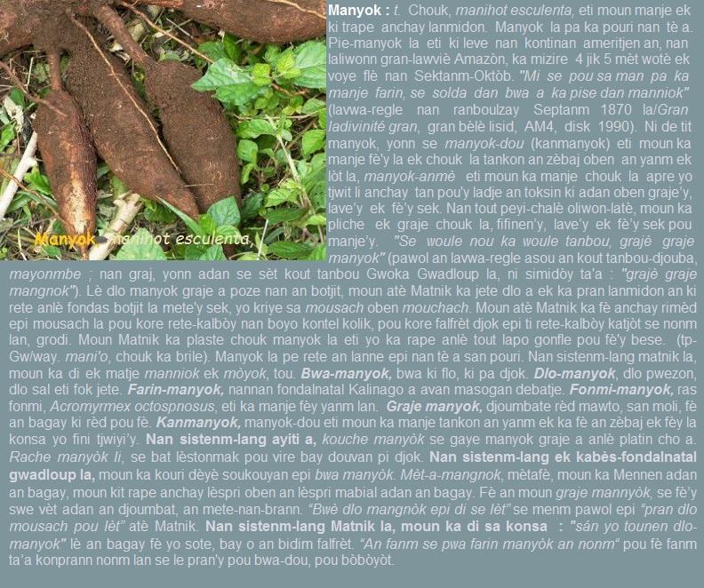 Manyok  manihot esculenta  kanmanyok