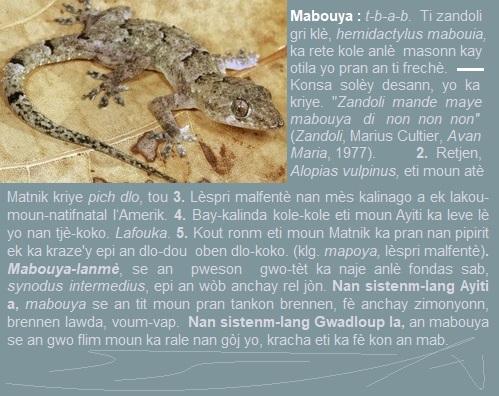 Mabouya  ti zandoli koulè gri klè  hemidactylus mabouia ka rete kole...