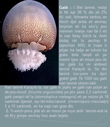 Galè, Stomolophus_meleagris, bèt lanmè, molpi ki fèt epi