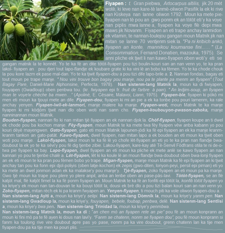 Fiyapen  gran piebwa  artocarpus altilis  jik 20 mèt wotè