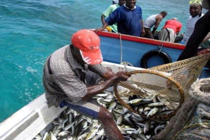 Eastern Caribbean flyingfish