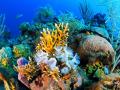 Caribbean Coral Reef near Cuba