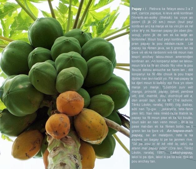 Papay  piebwa ka fetaye asou 3 a 7 mèt  carica papaya  ki leve anlè kontinan l'Amerik.