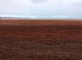Robè Lapwent-savann