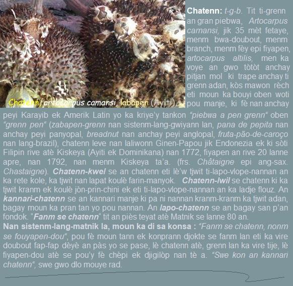 Chatenn  artocarpus camansi  labapen (Ayiti)  panapen (Puerto Rico)  Pantriba (Dominikana)
