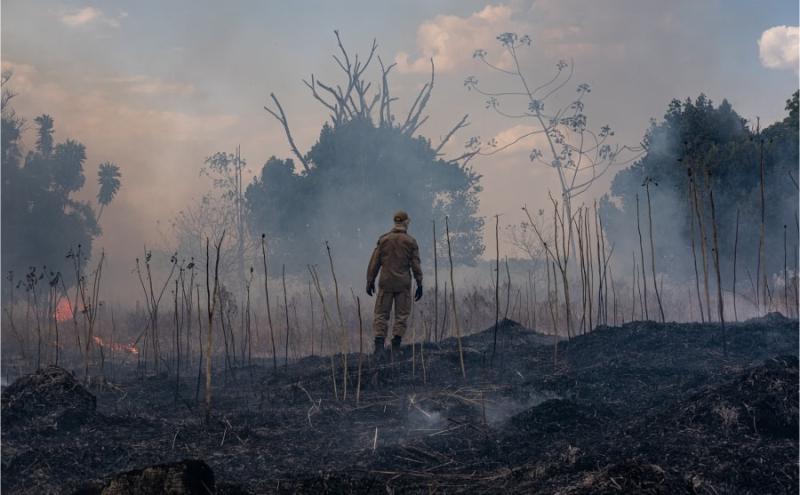 Amazonia fuego