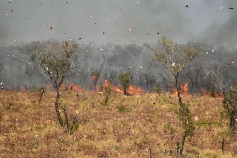 Amazonia especies_riesgo_incendios