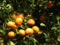 Mandarin Desanm