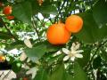 Mandarin 2020
