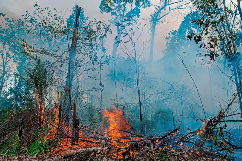 Amazonia dife