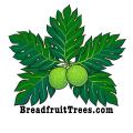 BreadfruitTrees.com