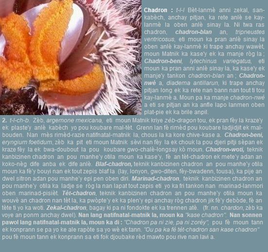 Chadron-blan  tripneustes ventricosus