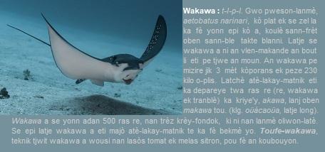 Wakawa gwo pweson-lanmè  - Aetobatus narinari -