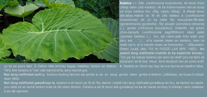 Kalalou nan lang natifnatal-matnik