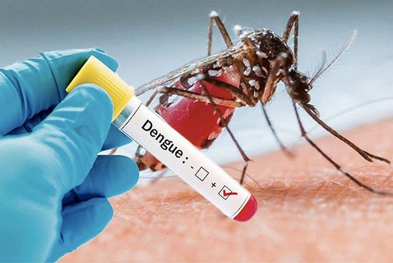 Ladeng aedes aegypti